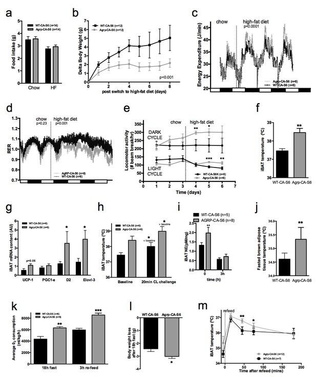 mTORC1 in AGRP neurons integrates exteroceptive and interoceptive food-related cues in the modulation of adaptive energy expenditure in mice